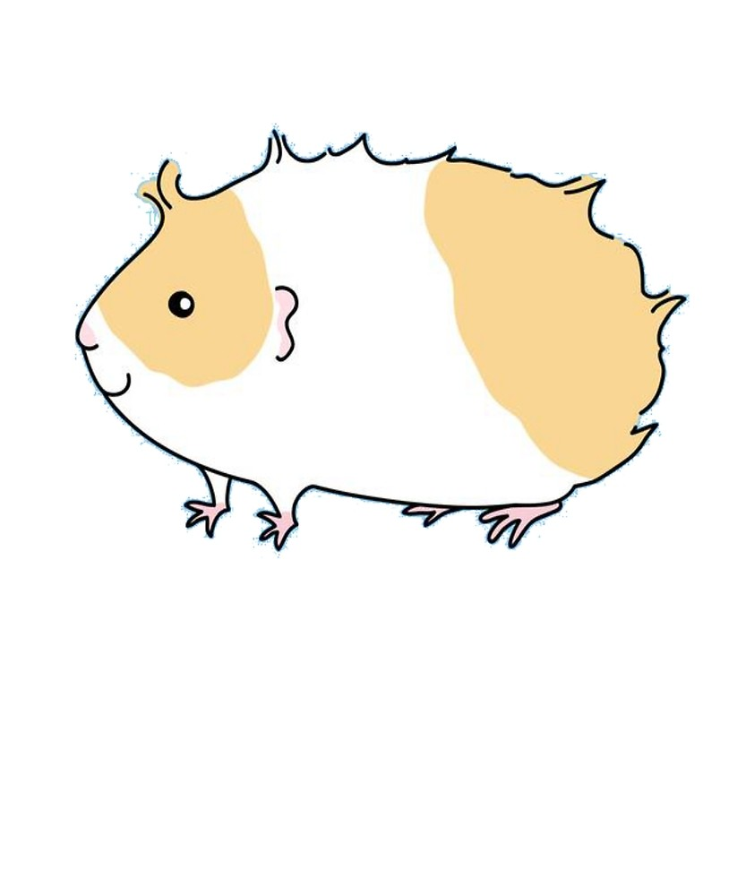 hight resolution of guinea pig drawing