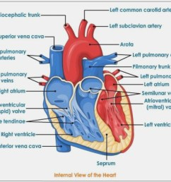993x794 how will how to draw heart diagram be in diagram information heart diagram drawing [ 993 x 794 Pixel ]