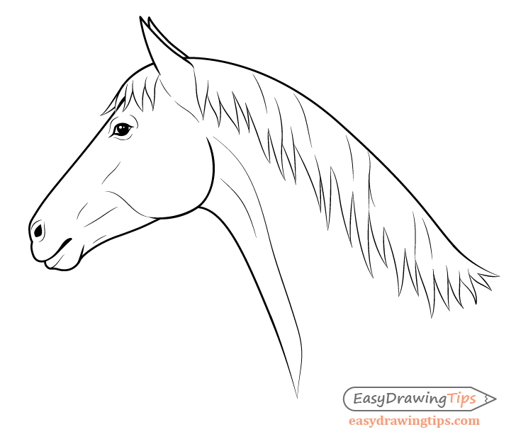 How To Draw A Horse Head Step By Step Easy