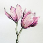 Simple Color Drawing Pictures