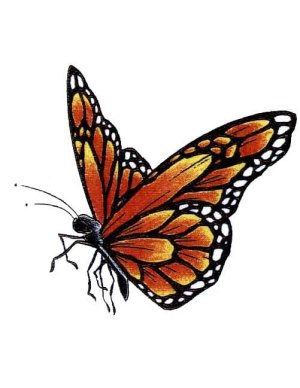 butterfly monarch tattoo side drawing flying designs paper stencil drawings tattoos outline nice watercolor latest fancy cool visit scroll 3d