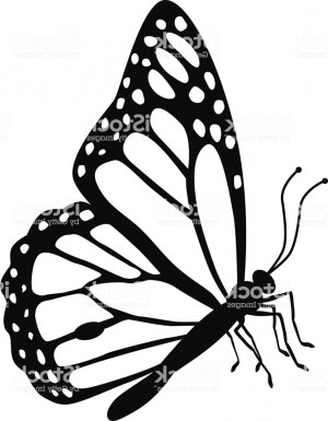 butterfly side monarch drawing outline clipart drawings stencil painting silhouette vector pencil clipartmag paintingvalley manna heaven gm looking dra getdrawings