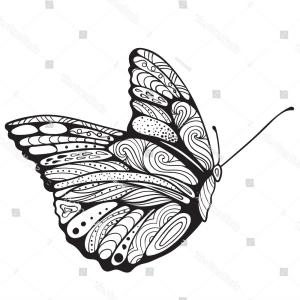 butterfly side drawing monarch drawings paintingvalley vector