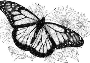 butterfly drawing side monarch drawings paintingvalley swallowtail