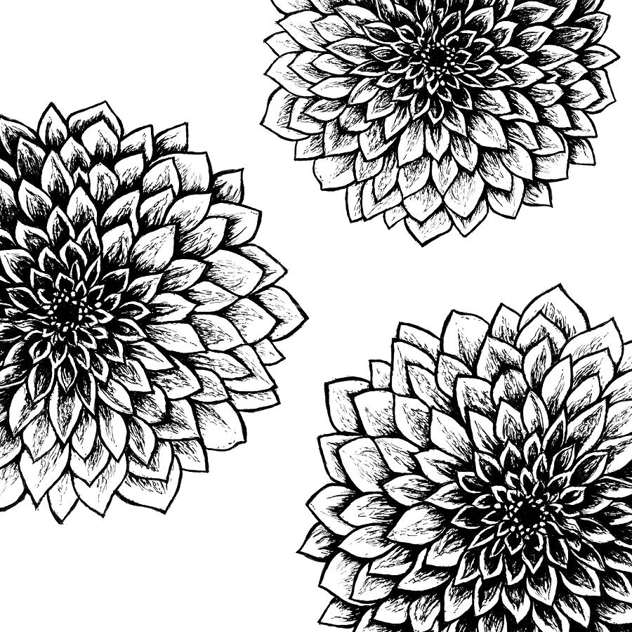 hight resolution of 900x900 black and white mums drawing mum flower drawing