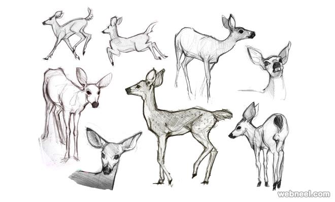 ocean animals drawing at