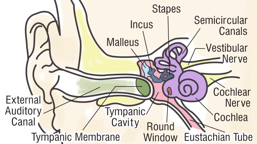 medium resolution of simplehuman ear diagram wiring diagram local simplehuman ear diagram