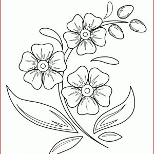 pictures of flowers drawing
