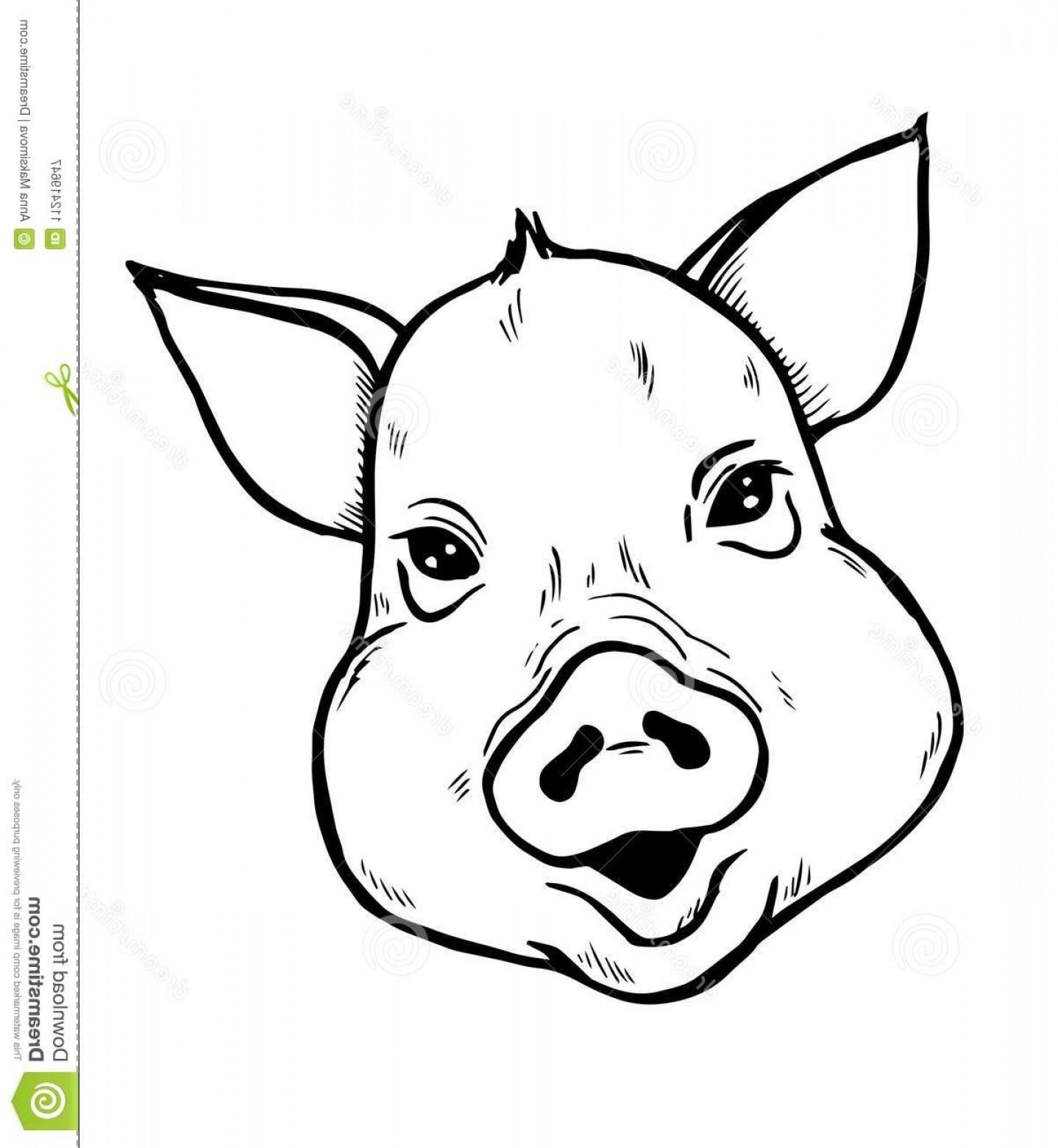 Pig Head Drawing At Paintingvalley