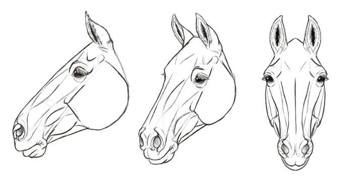 Realistic Horse Head Drawing at PaintingValley.com