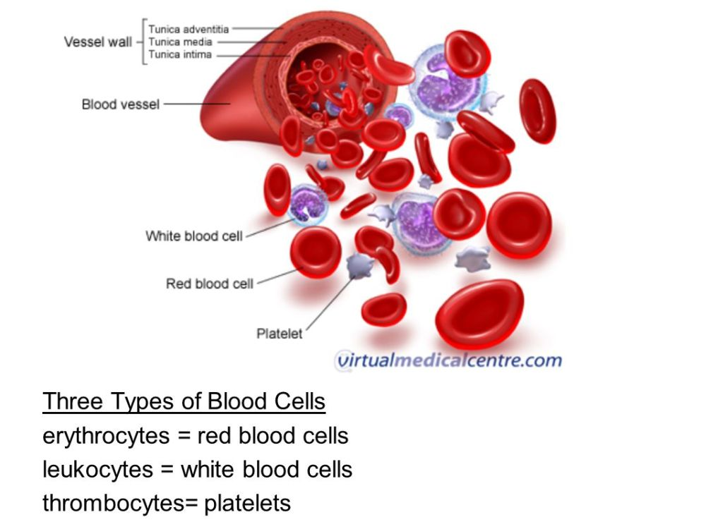 medium resolution of 1066x800 ch blood phlebotomist person trained to draw blood red blood cell drawing