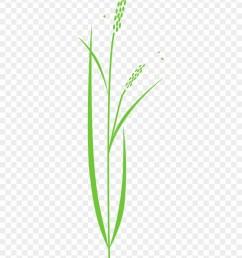 880x1080 rice plant rice plant drawing [ 880 x 1080 Pixel ]