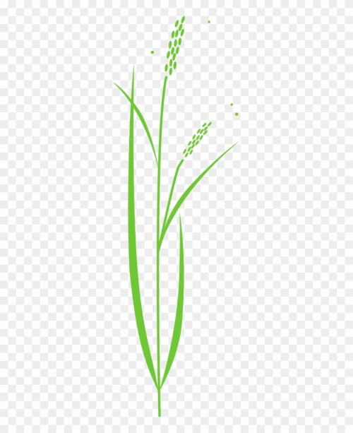 small resolution of 880x1080 rice plant rice plant drawing