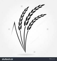 rice plant drawing [ 1500 x 1600 Pixel ]