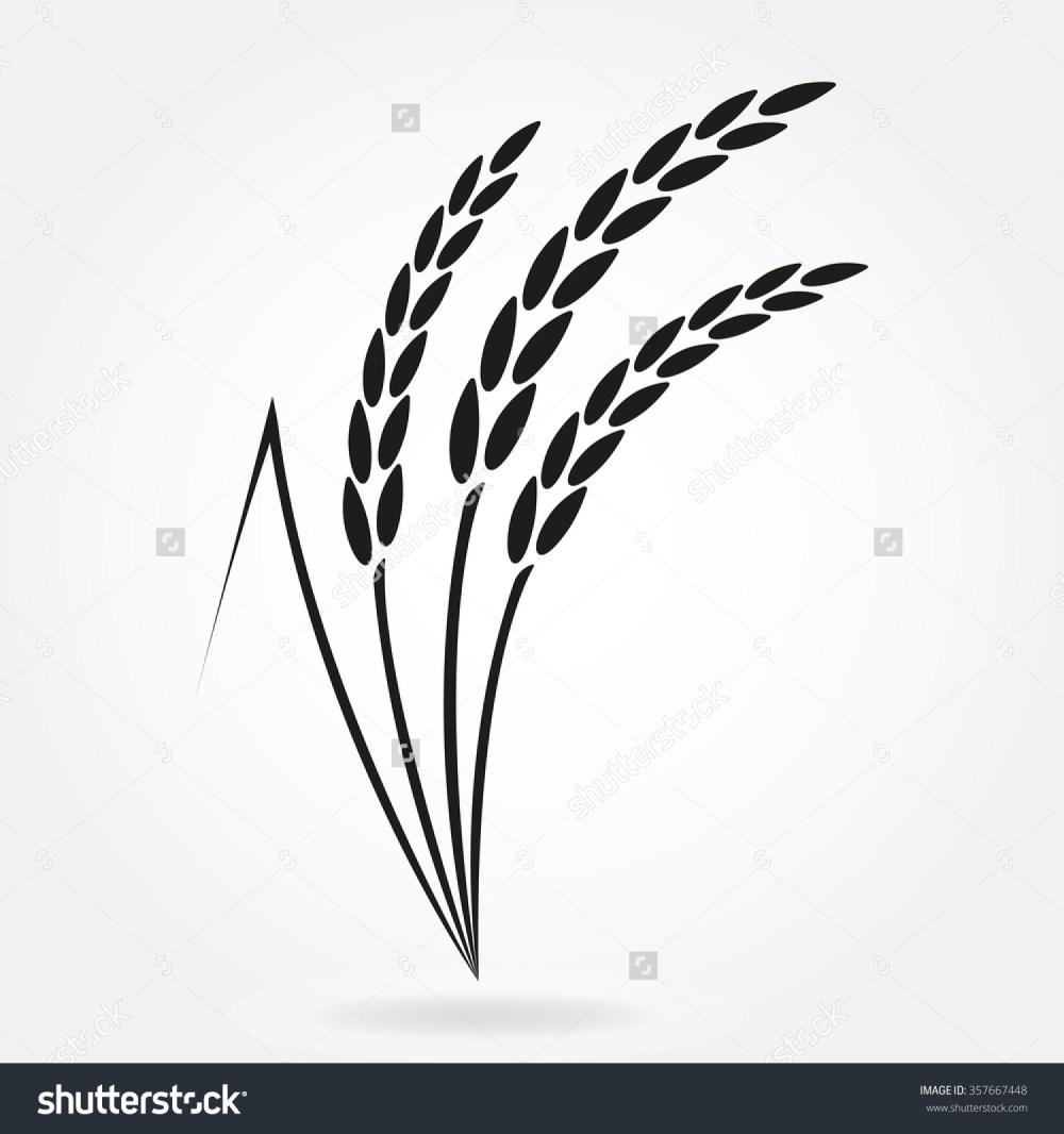 medium resolution of rice plant drawing