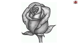 realistic rose step drawing drawings simple draw beginners steps flowers easy flower pencil tutorials paintingvalley portrait wikihow sia christopher