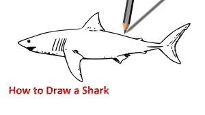 shark easy drawing draw drawings paintingvalley