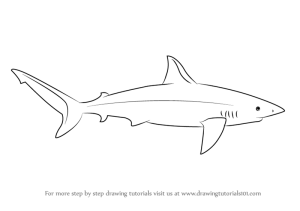 shark draw drawing galapagos sharks simple step drawings coloring tattoo learn drawingtutorials101 pages paintingvalley tutorials animals tutorial cool tattoos