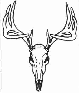 deer head drawing simple sketch paintingvalley drawings