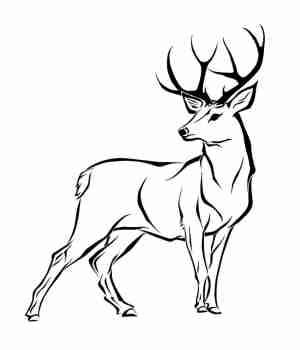 deer head drawing simple draw drawings paintingvalley