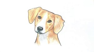 dog face drawing simple draw drawings paintingvalley