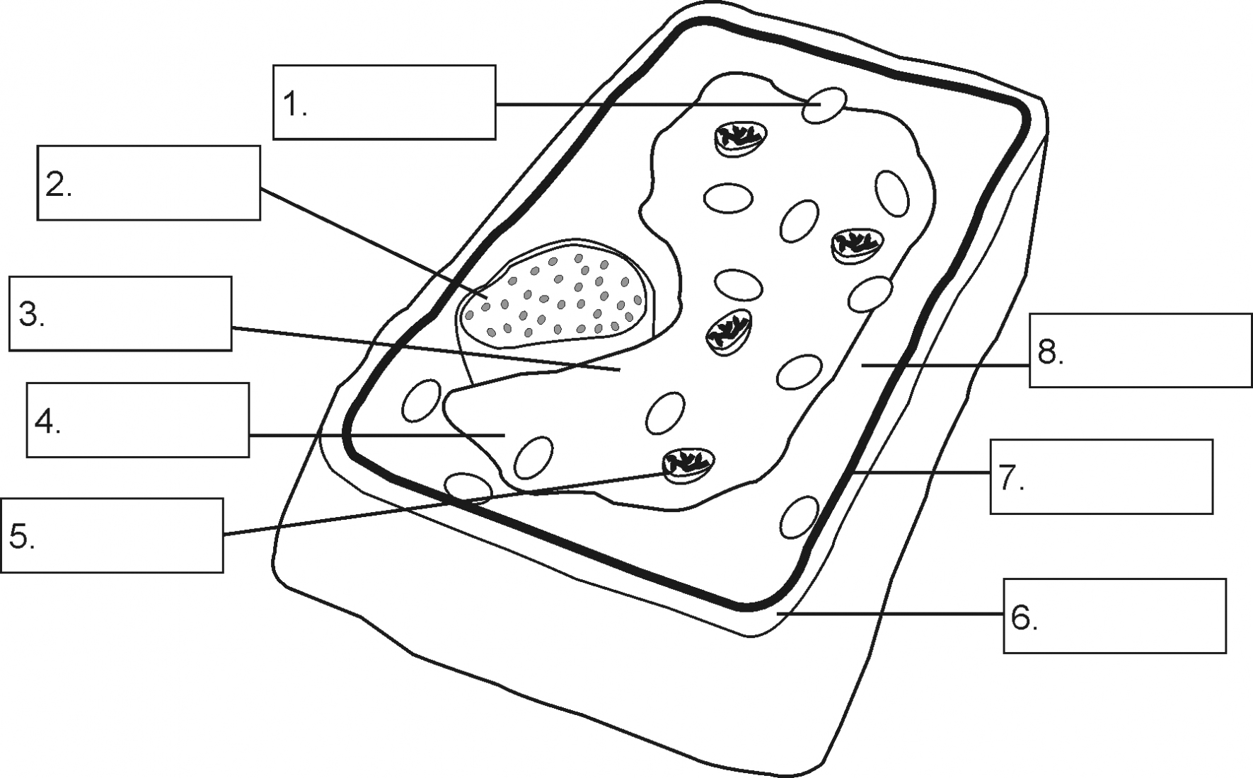 hight resolution of 1771x1100 plant cell diagram worksheet air american samoa simple plant cell drawing