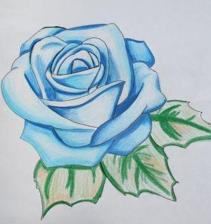rose drawing flower drawings sketch single simple nice paintingvalley trends getdrawings sketches painting explore loneliness famous jay bird paintings