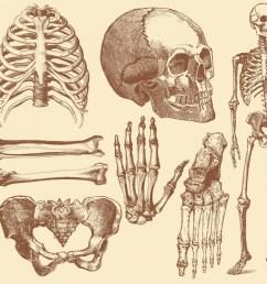 1680x1176 old style drawing human bones soidergi skeleton anatomy drawing [ 1680 x 1176 Pixel ]