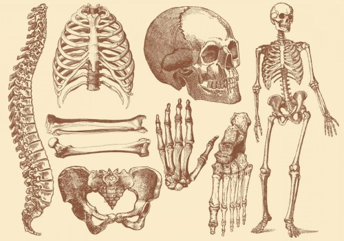 small resolution of 1680x1176 old style drawing human bones soidergi skeleton anatomy drawing