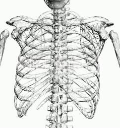 1920x1080 rotation of skeleton ribs chest anatomy human medical body  [ 1920 x 1080 Pixel ]