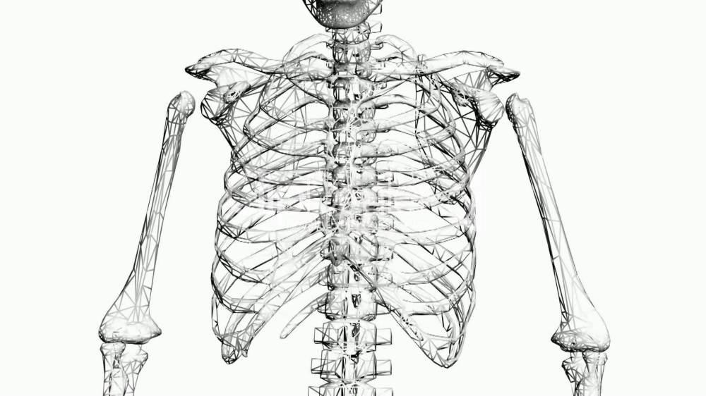 medium resolution of 1920x1080 rotation of skeleton ribs chest anatomy human medical body