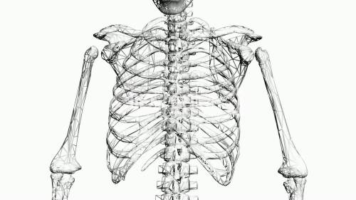 small resolution of 1920x1080 rotation of skeleton ribs chest anatomy human medical body