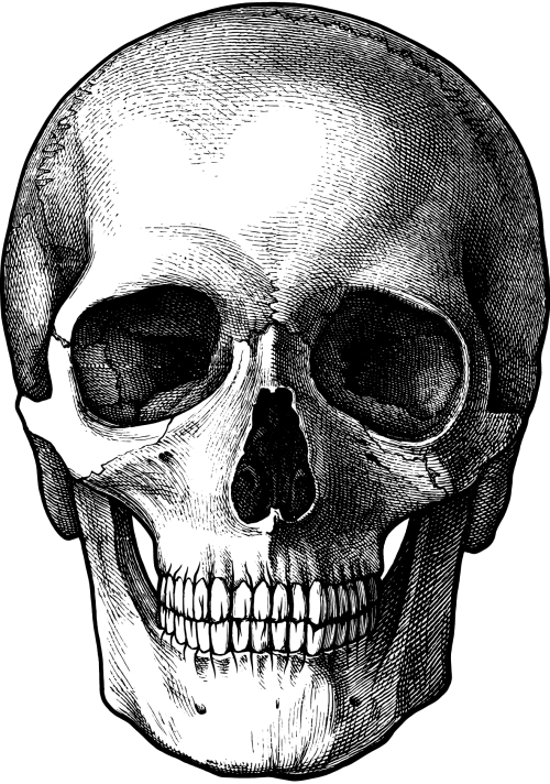 small resolution of 1317x1876 vintage skull drawing for photo transfer thanks a pumpkin spice skull teeth drawing