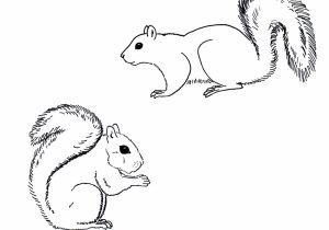 squirrel drawing easy at