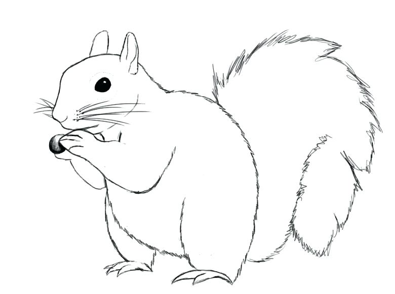 squirrel drawing step by