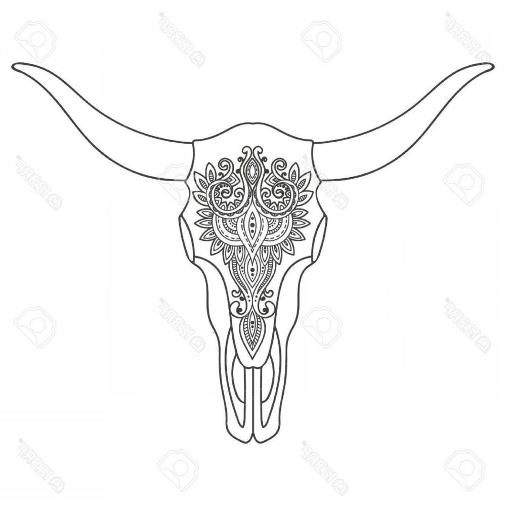 medium resolution of 1560x1560 steer skull drawing
