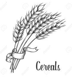 wheat line drawing [ 1300 x 1300 Pixel ]