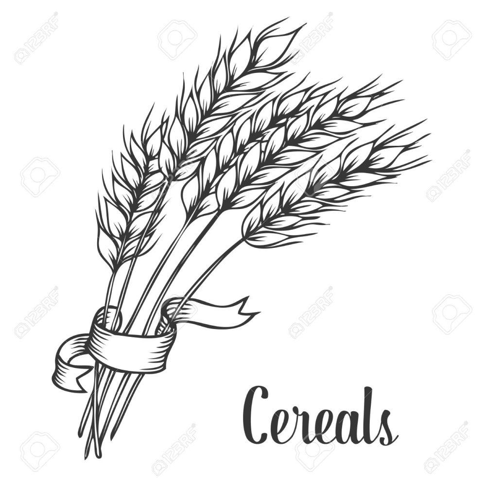 medium resolution of wheat line drawing