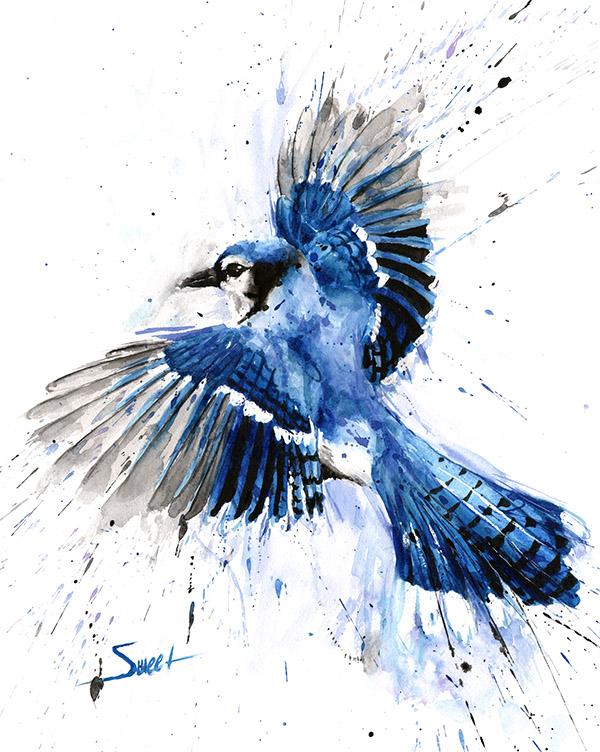 blue jay watercolor at
