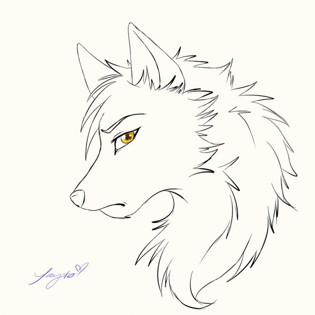 anime wolf sketch at