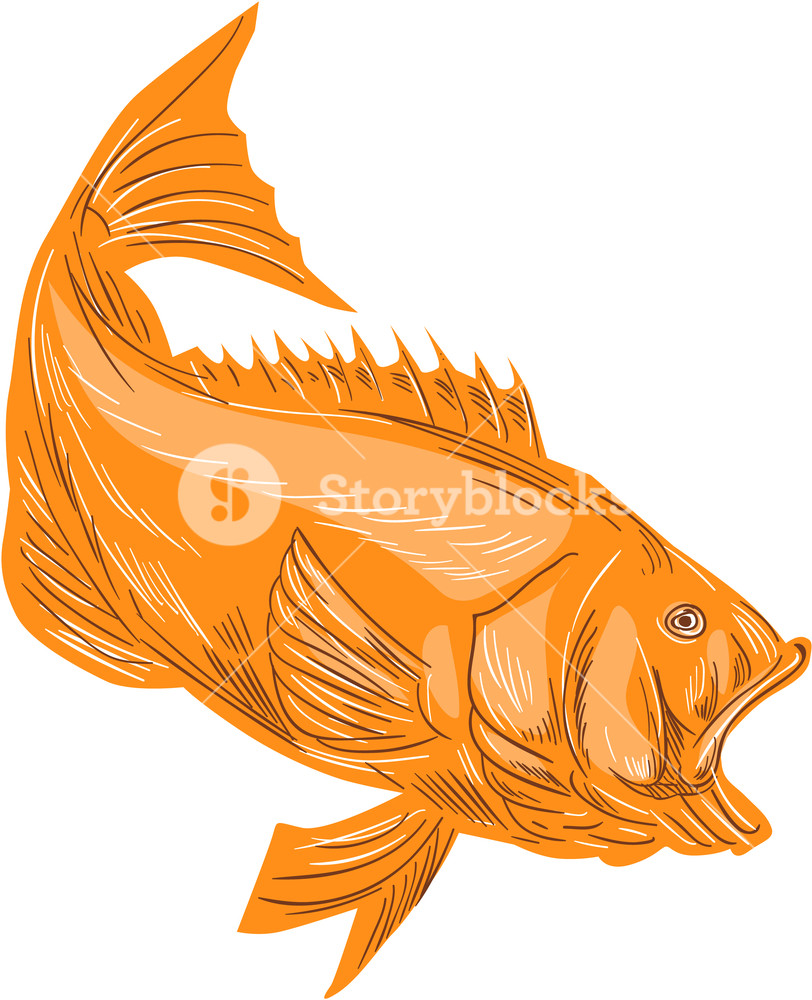hight resolution of 812x1000 drawing sketch style illustration of a largemouth bass fish diving bass fish sketch