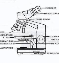 1065x794 compound binocular light microscope labeled binocular microscope sketch [ 1065 x 794 Pixel ]