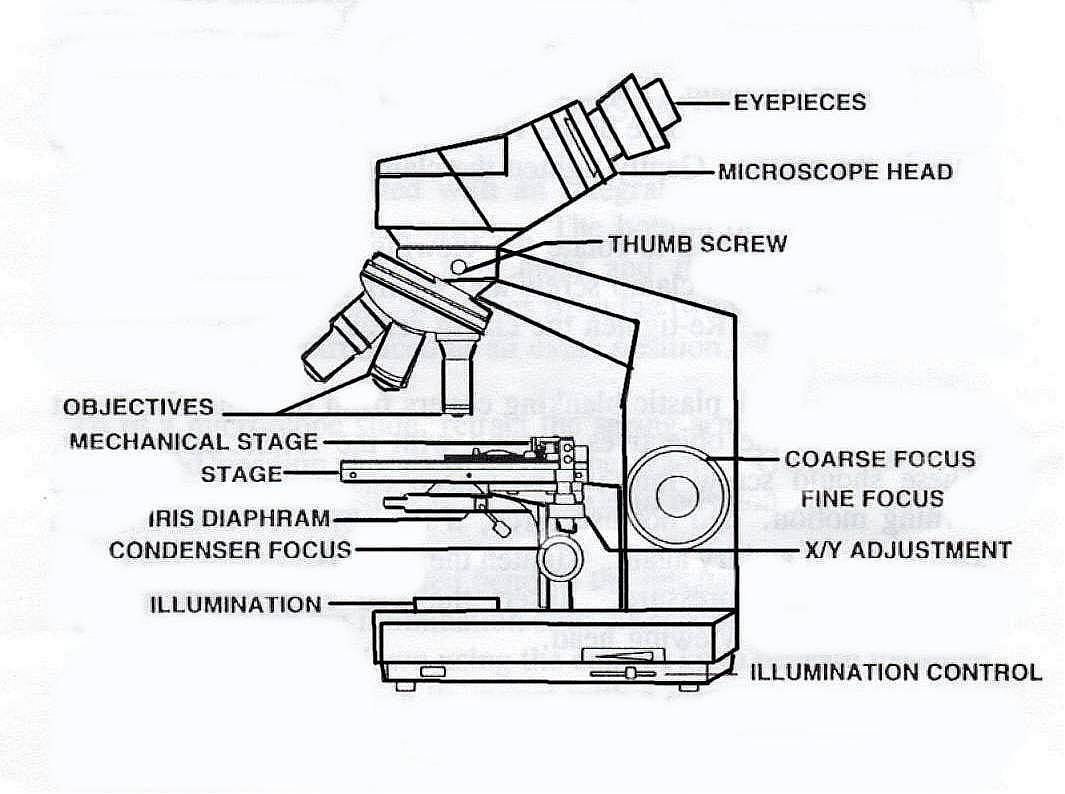 binocular compound microscope diagram 24v thermostat wiring split system sketch at paintingvalley com explore 1065x794 light labeled