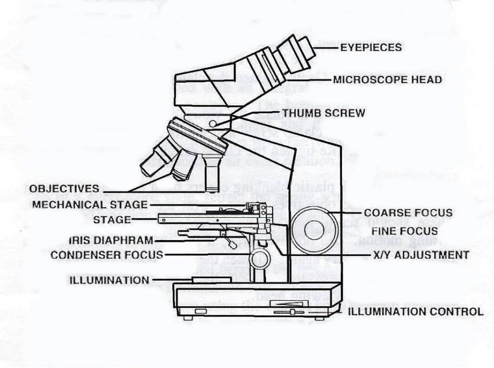 medium resolution of 1065x794 compound binocular light microscope labeled binocular microscope sketch