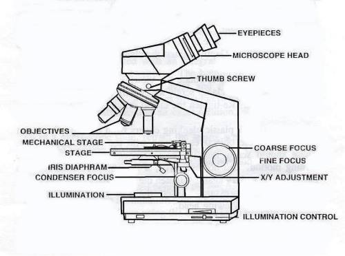 small resolution of 1065x794 compound binocular light microscope labeled binocular microscope sketch