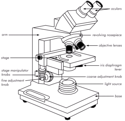 a well labelled diagram of microscope 1995 dodge ram 1500 transmission wiring binocular sketch at paintingvalley com explore 476x461 light microscopy clipart labeled function