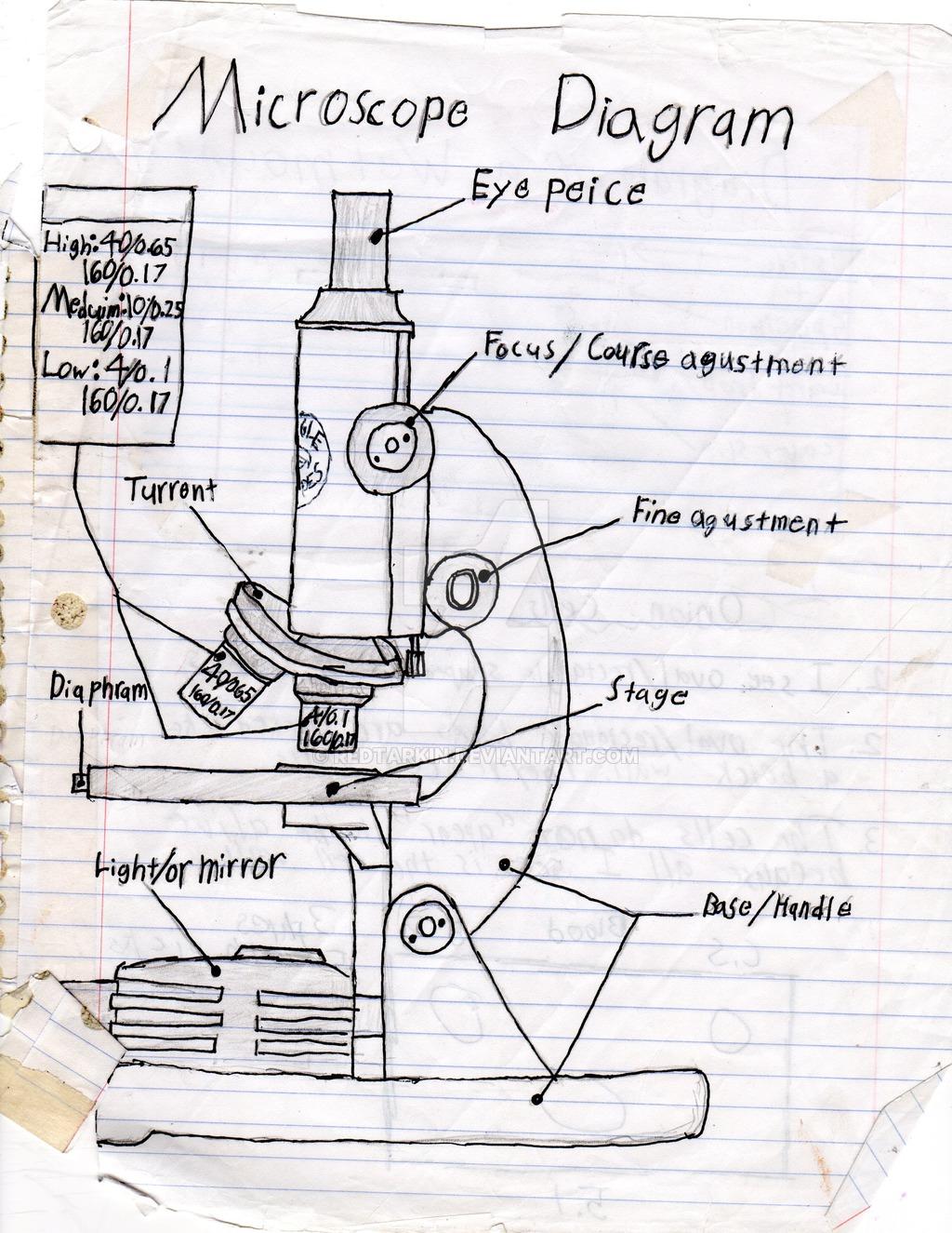 hight resolution of 1024x1325 a sketch diagram of a microscope binocular microscope sketch