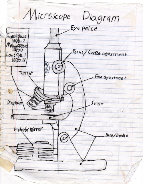 small resolution of 1024x1325 a sketch diagram of a microscope binocular microscope sketch