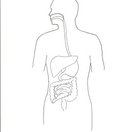 1275x1755 human body outline front and back unique picture human body front blank body sketch [ 1275 x 1755 Pixel ]