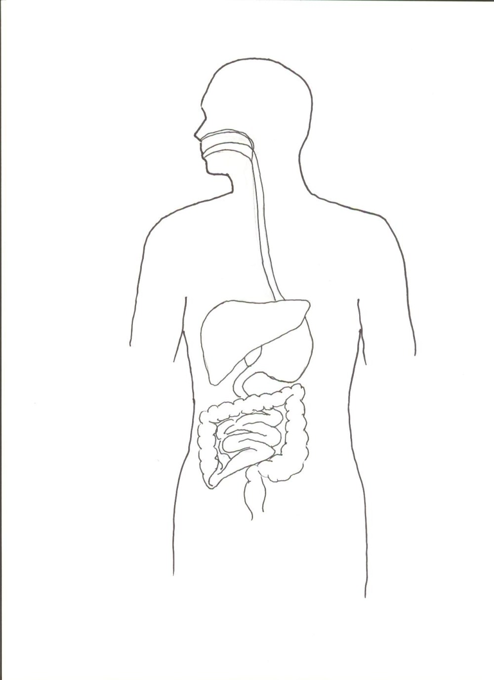 medium resolution of 1275x1755 human body outline front and back unique picture human body front blank body sketch